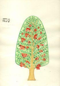 Sykomore Zeichnung von K. Aldenhoven